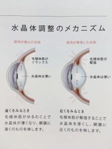 水晶体のメカニズム